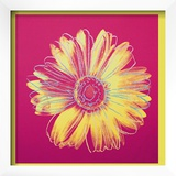 Daisy, c.1982 (Fuschia and Yellow) Posters by Andy Warhol