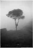 Lone Tree Macchu Picchu Peru Pôsters