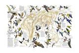 2004 Bird Migration Eastern Hemisphere Map Poster par  National Geographic Maps
