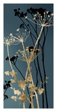 Twilight Botanicals I Posters par Aimee Wilson