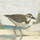 Beach Bird III Affiches par James Wiens