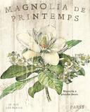 Magnolia de Printemps Posters by Sue Schlabach