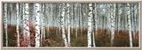 Silver Birch Forest, China Kunst