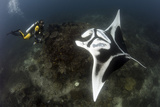 A Diver Has a Very Close Encounter with a Giant Oceanic Manta Ray Photographic Print