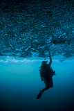 A Diver Reaches Up to Touch the Ceiling of an Undercut, Caused by Wave Erosion Fotografie-Druck