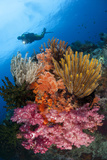 A Diver Approaches Colorful Soft Corals and Crinoids on the Reefs of Raja Ampat Fotografie-Druck