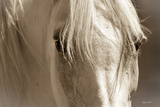 Angel Eyes Premium Photographic Print by Barry Hart