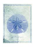 Sand Dollar B Premium Giclee Print by  GI ArtLab