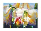 Amarylis Premium Giclee Print by Elizabeth Horning