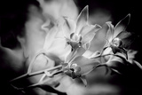 Orchid Photographic Print by Margaret Morgan