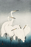 Five White Herons Standing in Water; Snow Falling Giclée-tryk af Koson Ohara