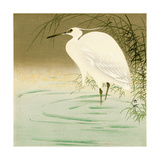 Wading Egret Giclée-tryk af Koson Ohara