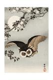 Scops Owl Flying under Cherry Blossoms Giclée-tryk af Koson Ohara