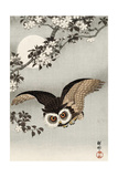 Scops Owl Flying under Cherry Blossoms Lámina giclée por Koson Ohara