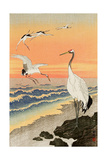 Cranes on Seashore Reproduction procédé giclée par Koson Ohara