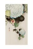 Sparrow on Hydrangea Reproduction procédé giclée par Koson Ohara