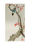 Blue Bird on a Plum Tree Reproduction procédé giclée par Koson Ohara