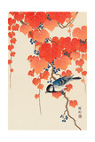 Bird and Red Ivy Reproduction procédé giclée par Koson Ohara