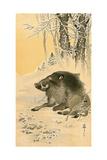Wild Boar Lámina giclée por Koson Ohara
