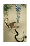 Sparrows and Wisteria Giclée-tryk af Koson Ohara