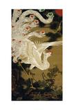 Phoenix on the Pine Giclée-tryk af Jakuchu Ito
