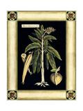 Paradise Palm VI Arte por Deborah Bookman