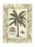 Palm in Bamboo Frame II Konst