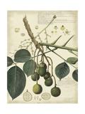 Descube Botanical VI Julisteet