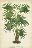 Palm of the Tropics IV Affiches par  Van Houtteano