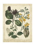 Non-Embellish Enchanted Garden I Giclée-Premiumdruck von Sydenham Teast Edwards