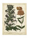 Non-Embellish Enchanted Garden IV Art by Sydenham Teast Edwards