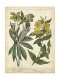Non-Embellish Enchanted Garden III Giclée-Premiumdruck von Sydenham Teast Edwards
