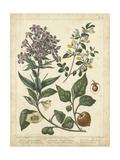 Non-Embellish Enchanted Garden II Giclée-Premiumdruck von Sydenham Teast Edwards