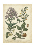 Non-Embellish Enchanted Garden II Prints by Sydenham Teast Edwards