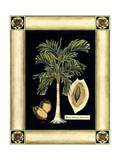 Paradise Palm V Pôsters por Deborah Bookman
