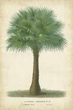 Palm of the Tropics I Art by Horto Van Houtteano