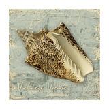 Weathered Shells I Kunstdrucke von Kate Ward Thacker
