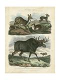 Deer and Moose Giclée-Premiumdruck von Sydenham Teast Edwards