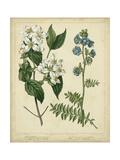 Cottage Florals I Poster av Sydenham Teast Edwards