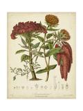 Twining Botanicals II Posters por Elizabeth Twining