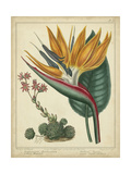 Golden Bird of Paradise Giclée-Premiumdruck von Sydenham Teast Edwards