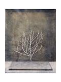 Desert Form II Print by Elena Ray