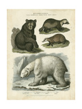Brown Bear and Polar Bear Posters af Sydenham Teast Edwards