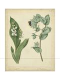 Cottage Florals IV Giclée-Premiumdruck von Sydenham Teast Edwards