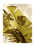 Palm Fronds I Posters af Rachel Perry
