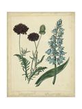 Cottage Florals VI Kunstdrucke von Sydenham Teast Edwards