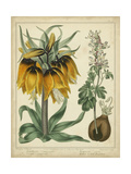 Golden Crown Imperial Kunstdruck von Sydenham Teast Edwards