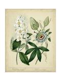 Cottage Florals II Posters van Sydenham Teast Edwards