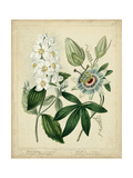 Cottage Florals II Posters by Sydenham Teast Edwards