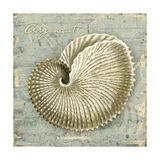 Weathered Shells II Poster von Kate Ward Thacker